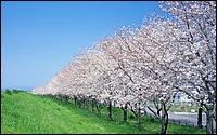 寬屏日本風景 1440*900 20 - [wall001.com]_widescreen_nature_wallpaper_IMG0063.jpg